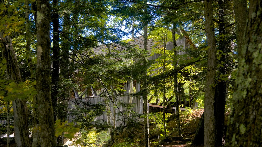Bethel showing forests