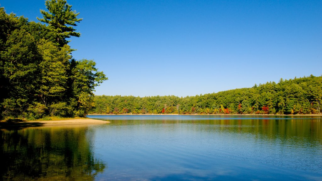 Walden Pond showing a lake or waterhole and landscape views