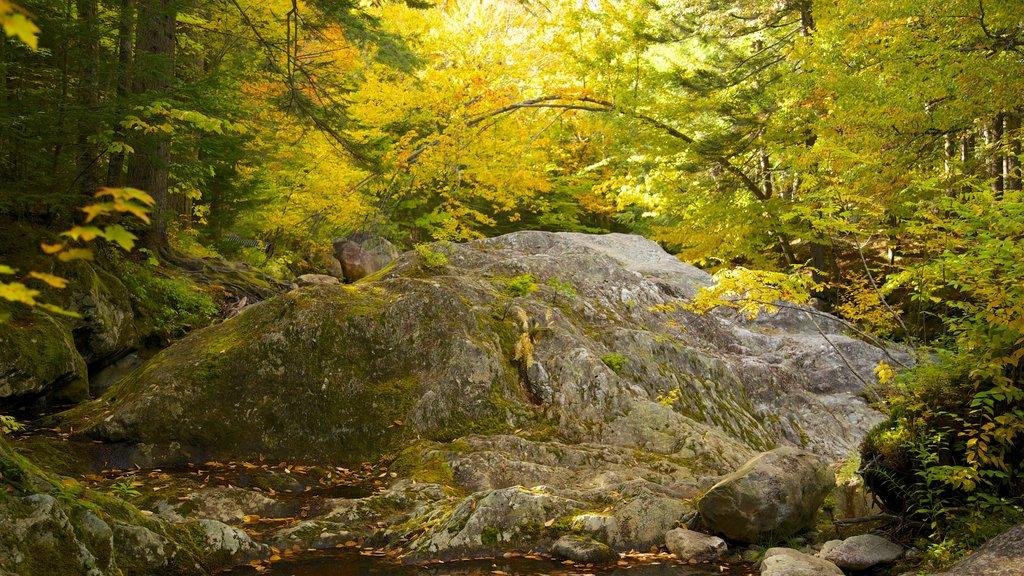 Green Mountain National Forest ofreciendo escenas forestales y los colores del otoño