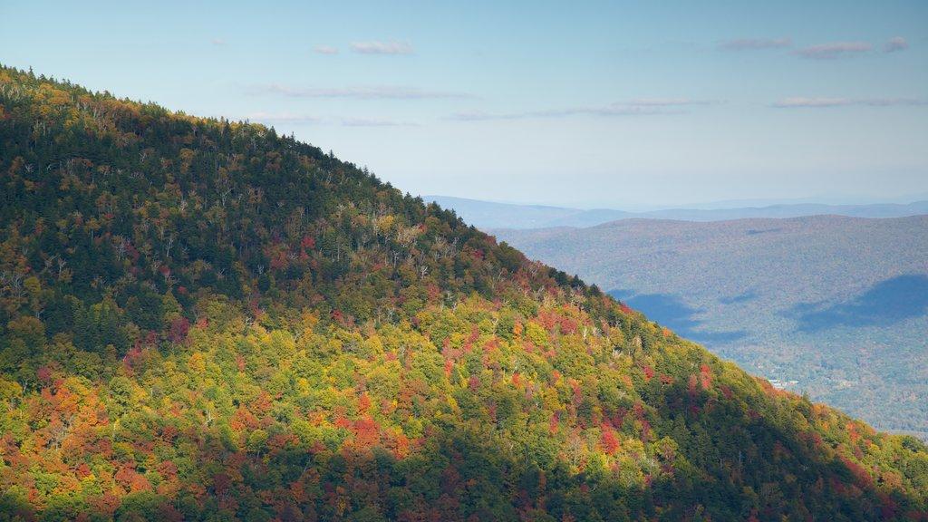 Monte Equinox que incluye los colores del otoño, escenas tranquilas y escenas forestales