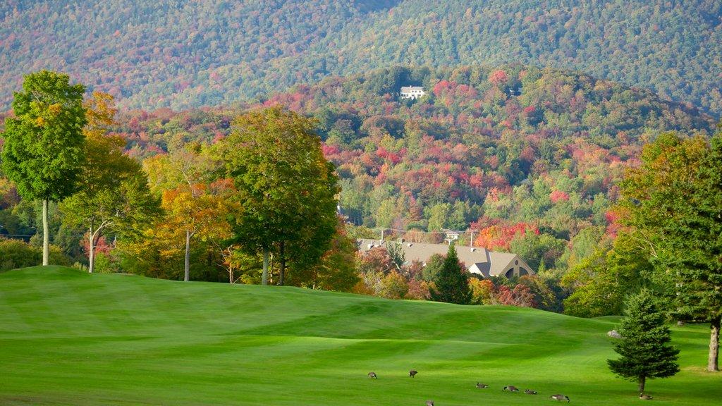 Campo de golf Killington mostrando vistas de paisajes y escenas forestales