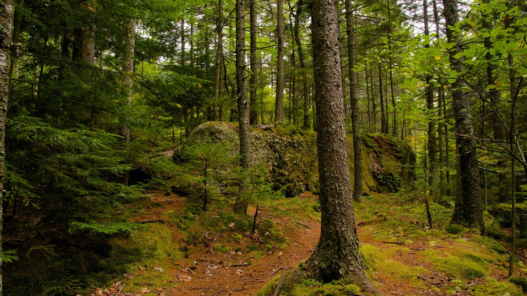 Maine showing forests