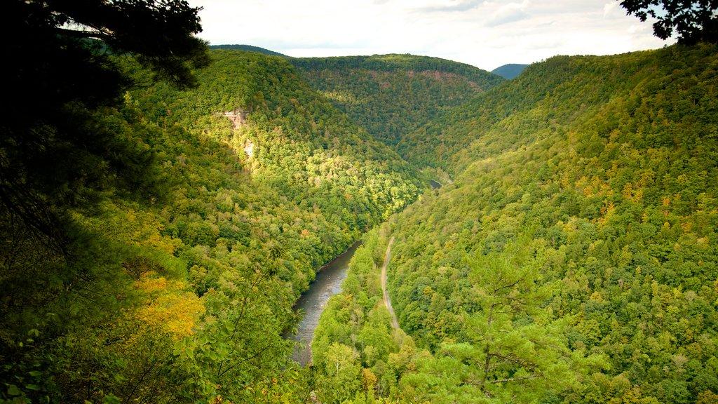 Erie que incluye bosques y un barranco o cañón