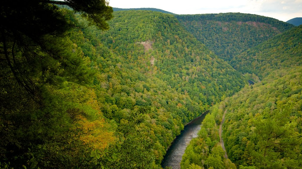 Pine Creek Gorge showing a river or creek, landscape views and tranquil scenes