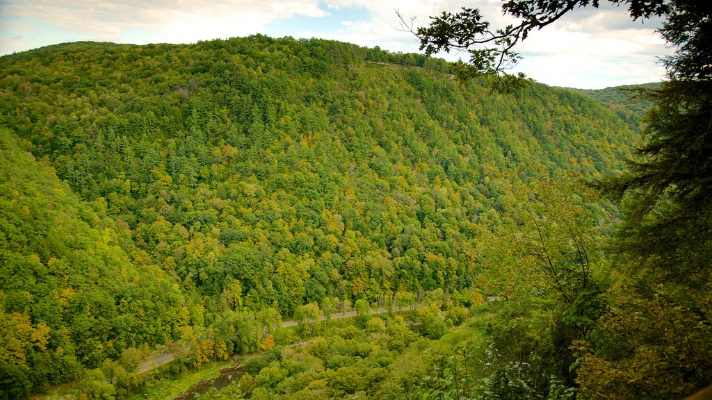 Pine Creek Gorge featuring landscape views and tranquil scenes