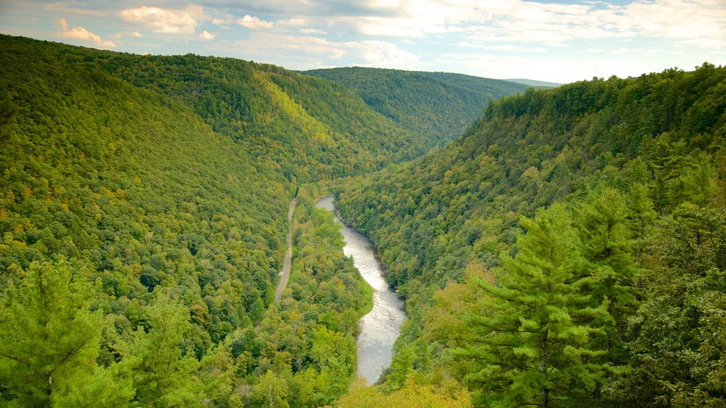 Erie showing a gorge or canyon and forest scenes