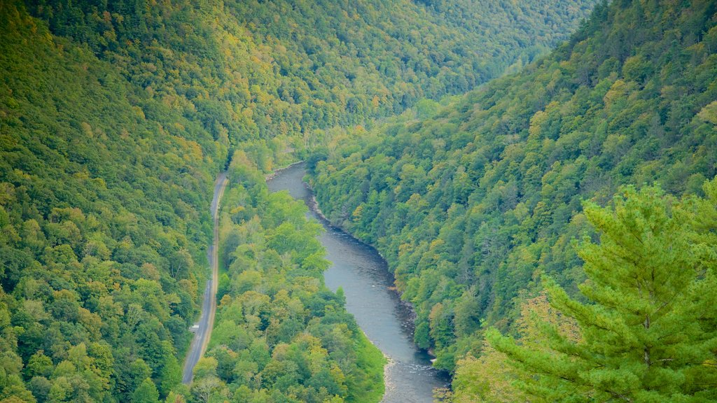 Erie showing forests and a gorge or canyon