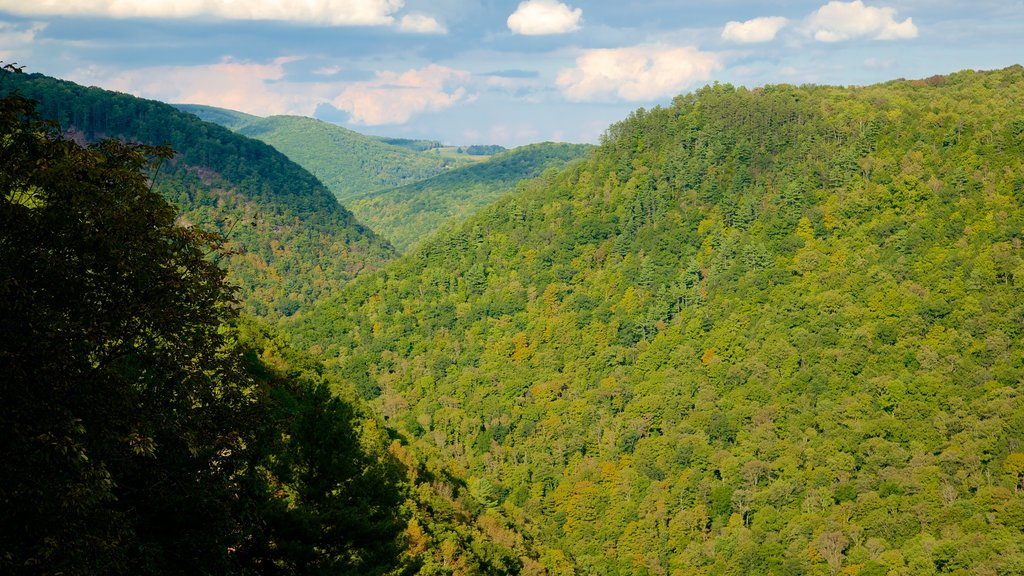 Pine Creek Gorge showing landscape views and tranquil scenes