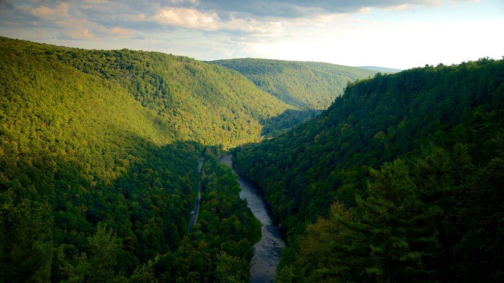 Pine Creek Gorge which includes tranquil scenes and landscape views