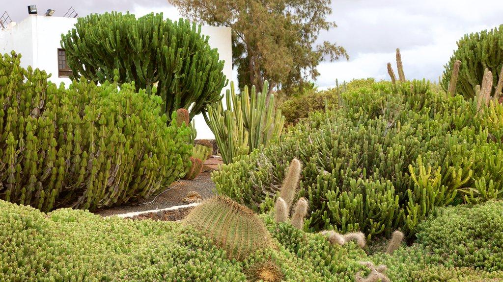 Fuerteventura showing a park