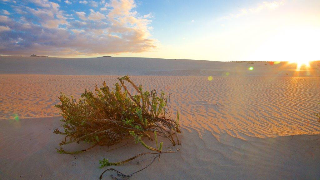 Fuerteventura featuring desert views and a sunset