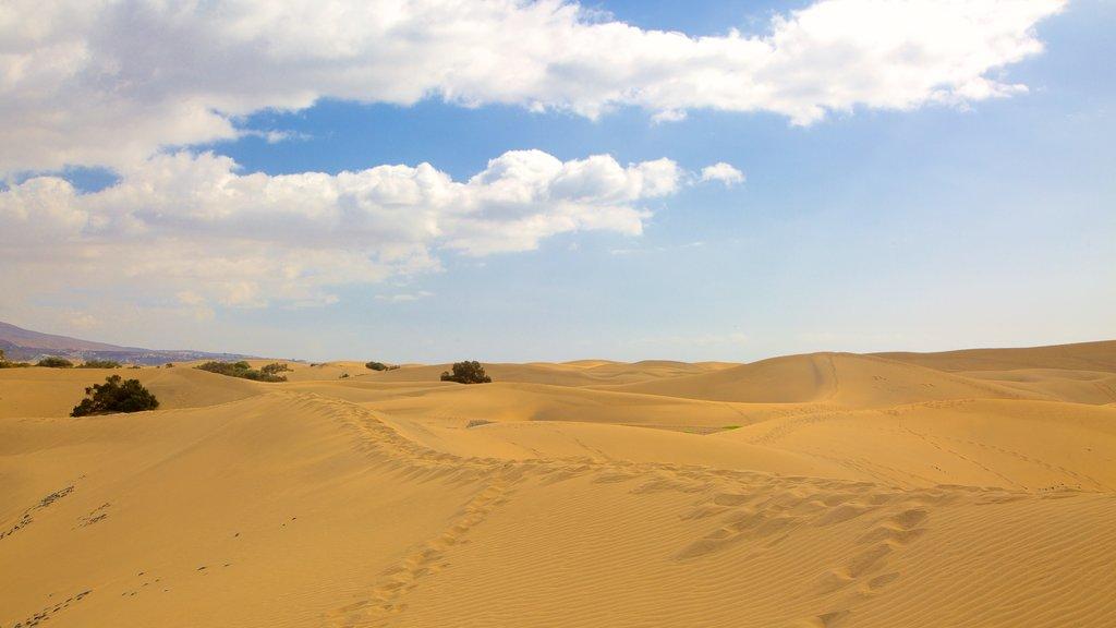 Maspalomas Dunes featuring desert views