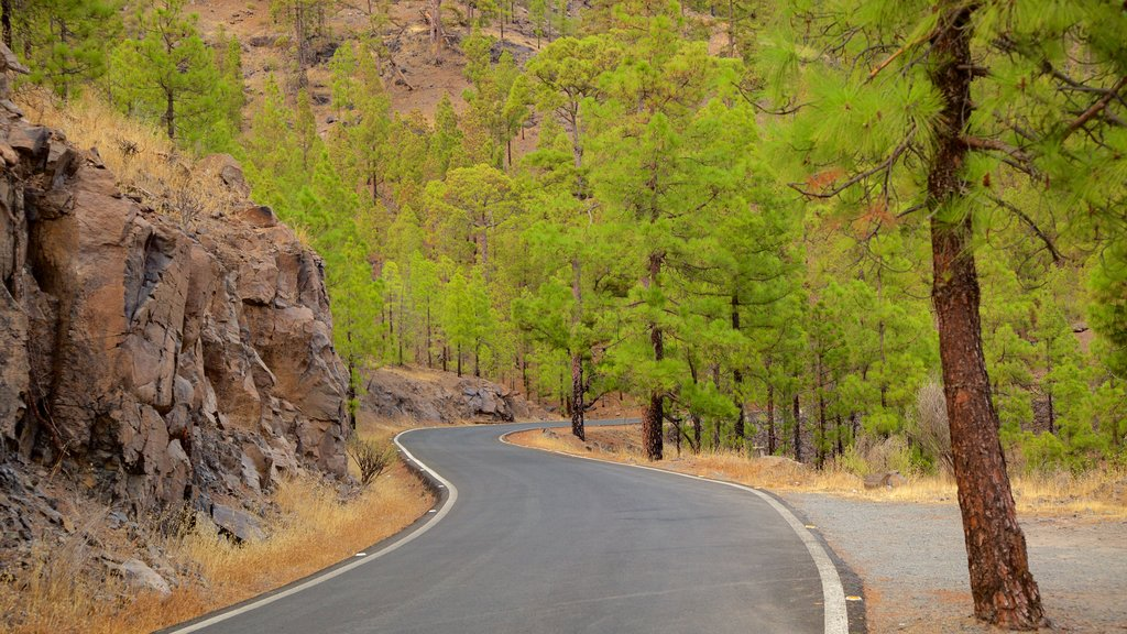Gran Canaria showing tranquil scenes