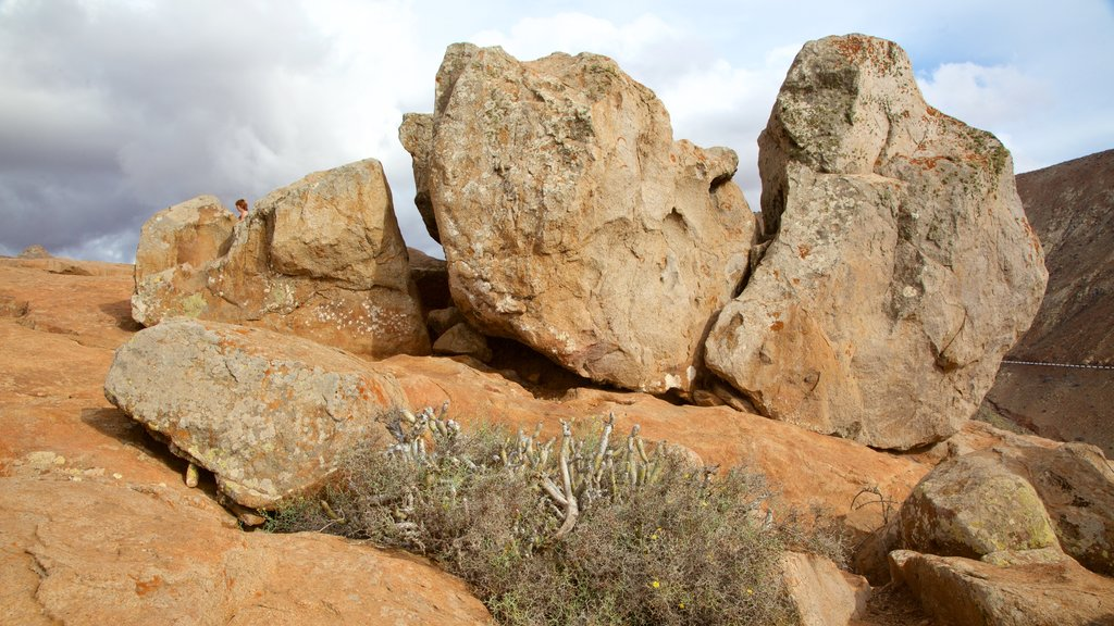 Pajara which includes desert views