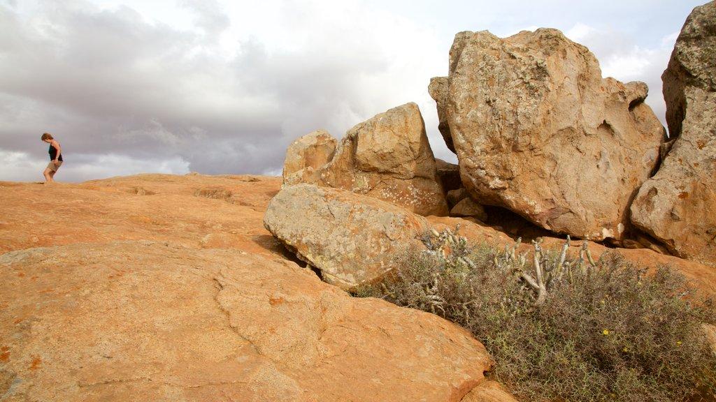 Pajara featuring desert views