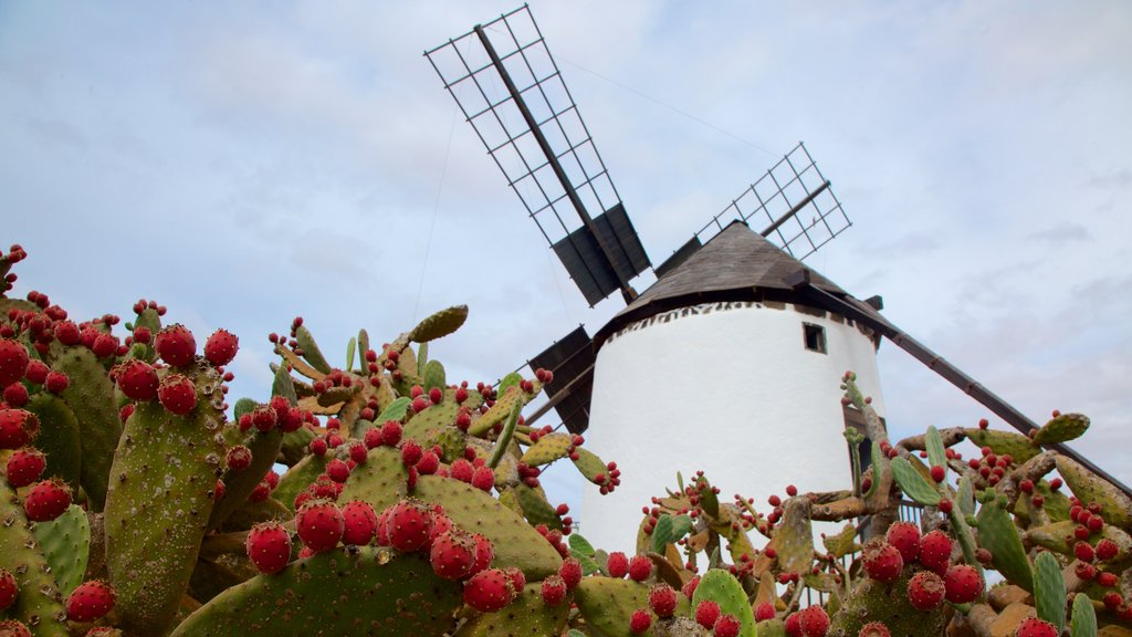 Antigua which includes flowers and a windmill