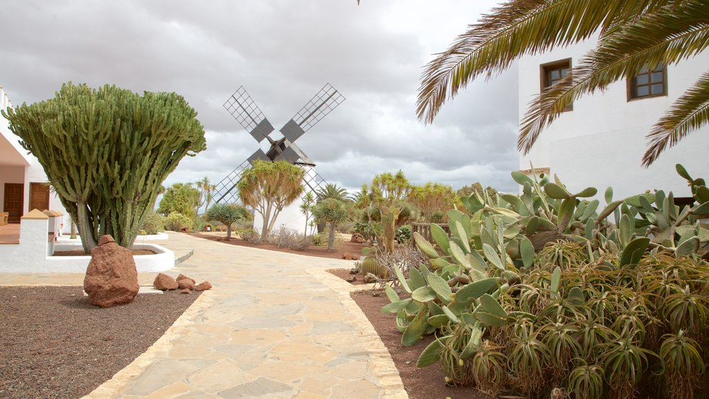 Antigua showing a garden and a windmill