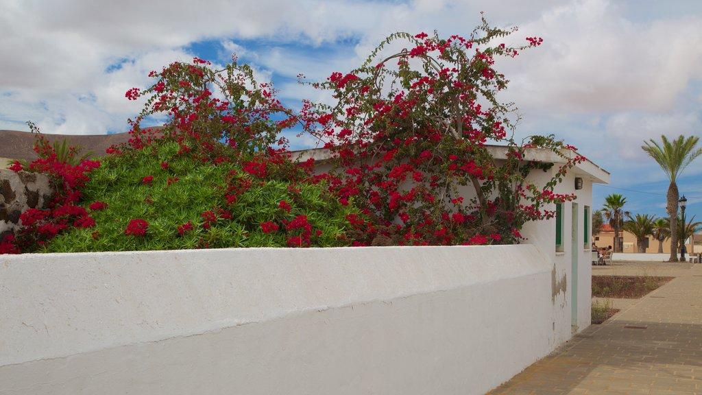 La Oliva featuring flowers