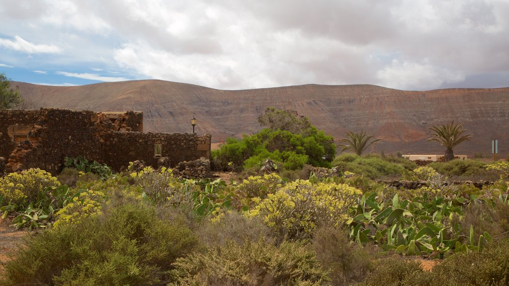 La Oliva showing a garden
