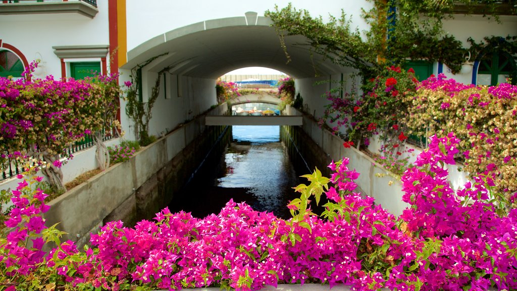 Mogan featuring flowers and a river or creek