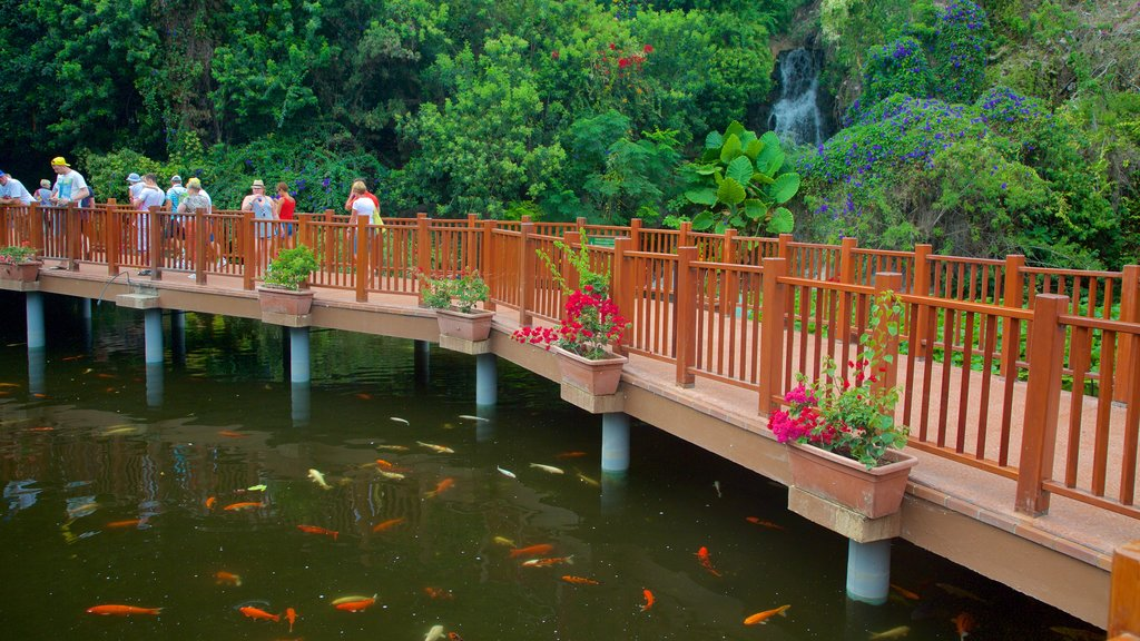 Loro Parque which includes marine life, rainforest and a garden
