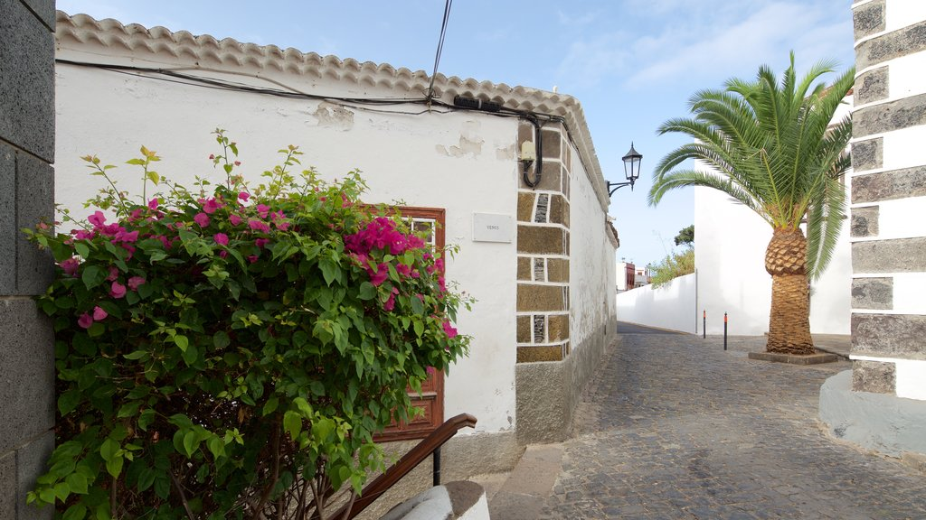 Garachico which includes a small town or village and flowers