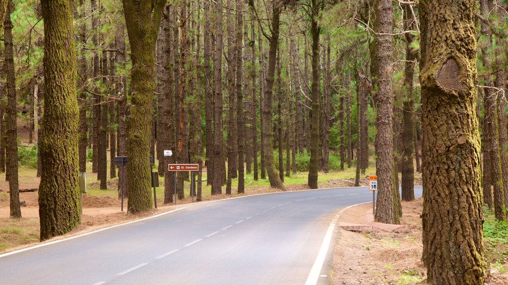 Santiago del Teide which includes forests