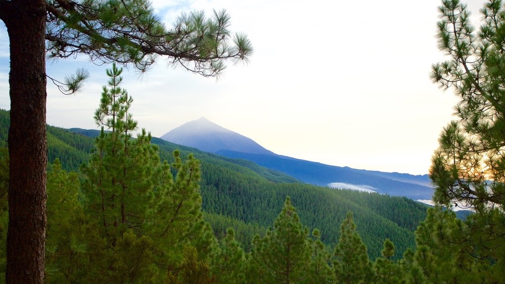Santiago del Teide which includes mountains and forests
