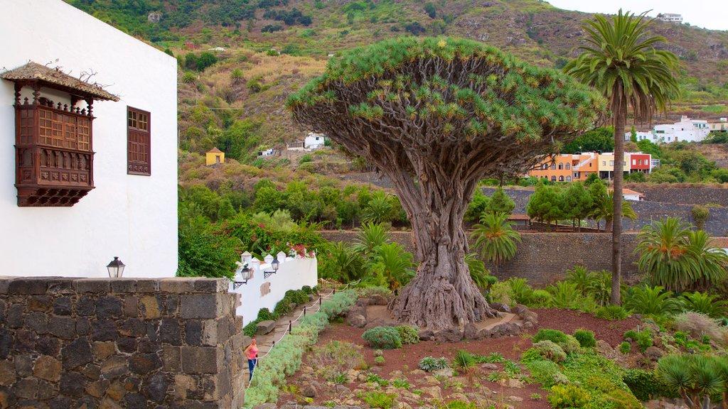 Icod de los Vinos featuring a garden
