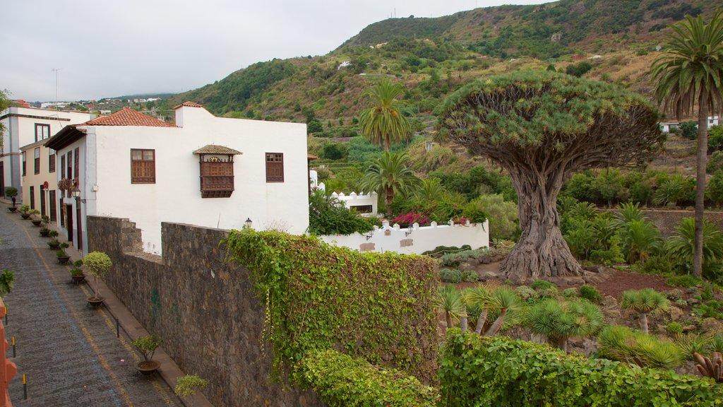 Icod de los Vinos which includes a small town or village