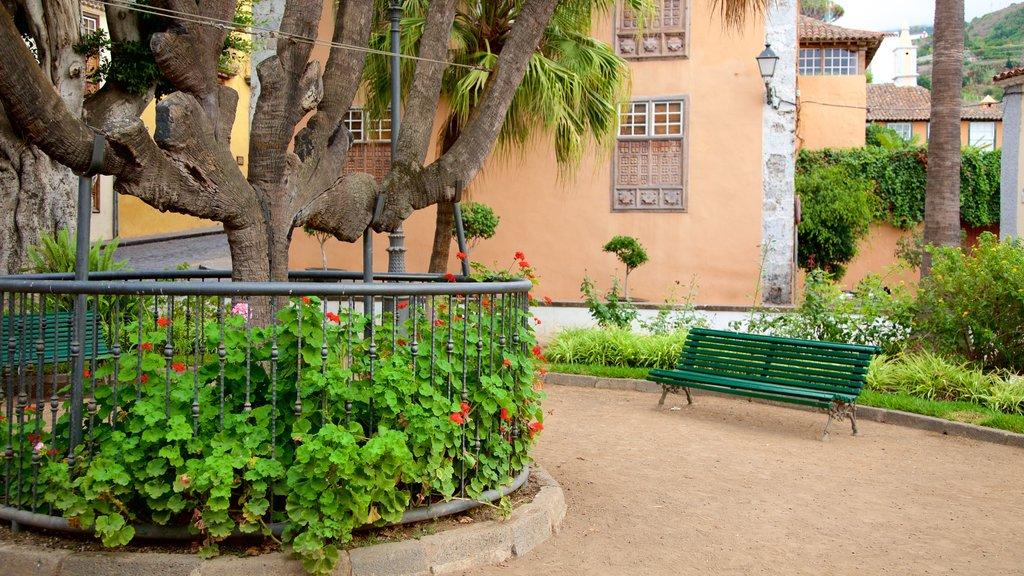 Icod de los Vinos showing a park