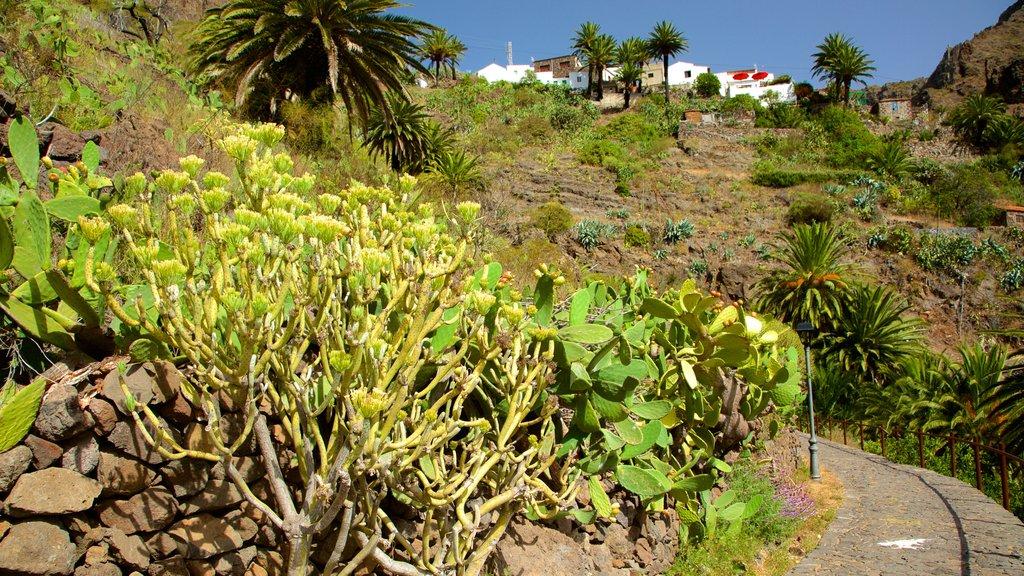 Masca which includes a garden