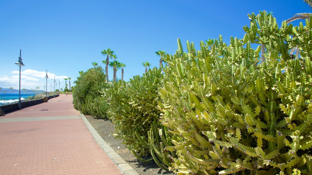 Playa Blanca which includes a park and general coastal views