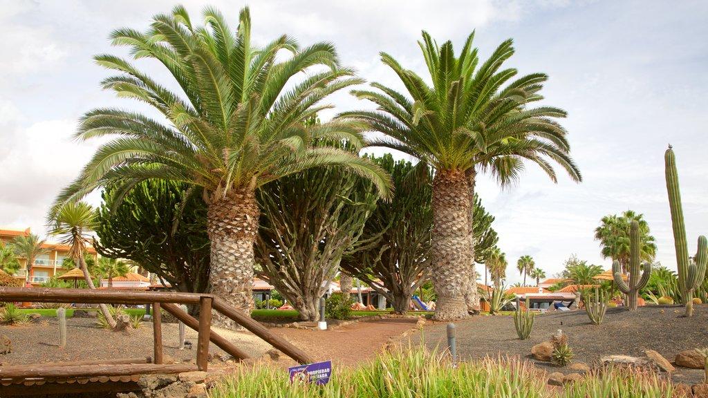 Caleta de Fuste which includes a garden
