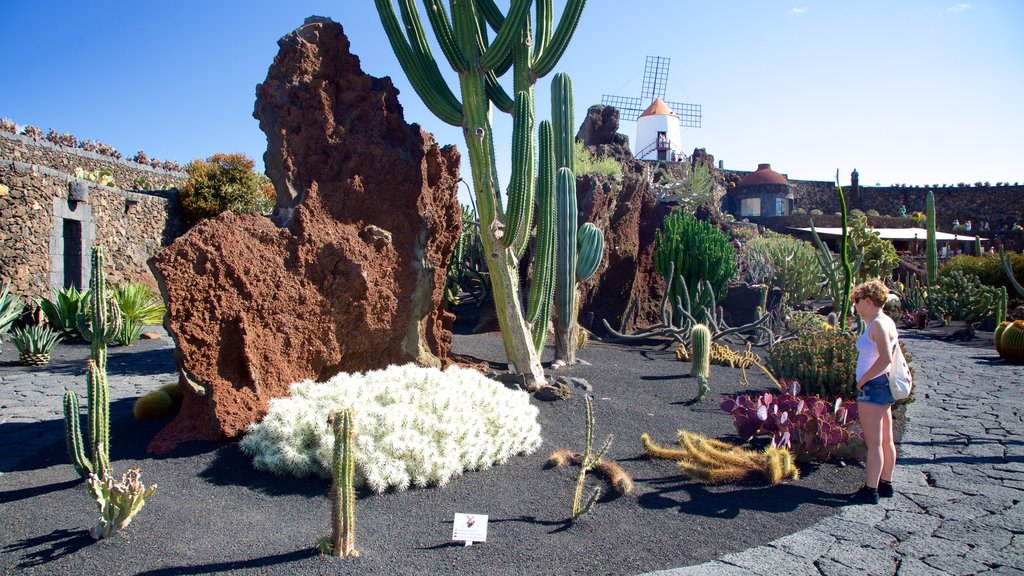 Cactus Garden showing a park