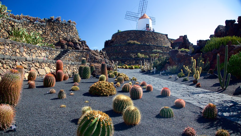 Cactus Garden which includes a park and a windmill