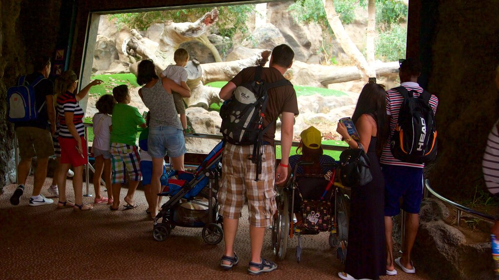 Loro Parque which includes zoo animals as well as a large group of people