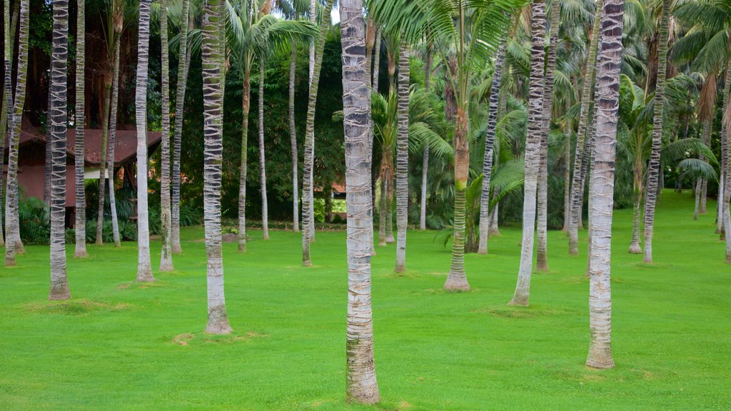 Loro Parque which includes a garden