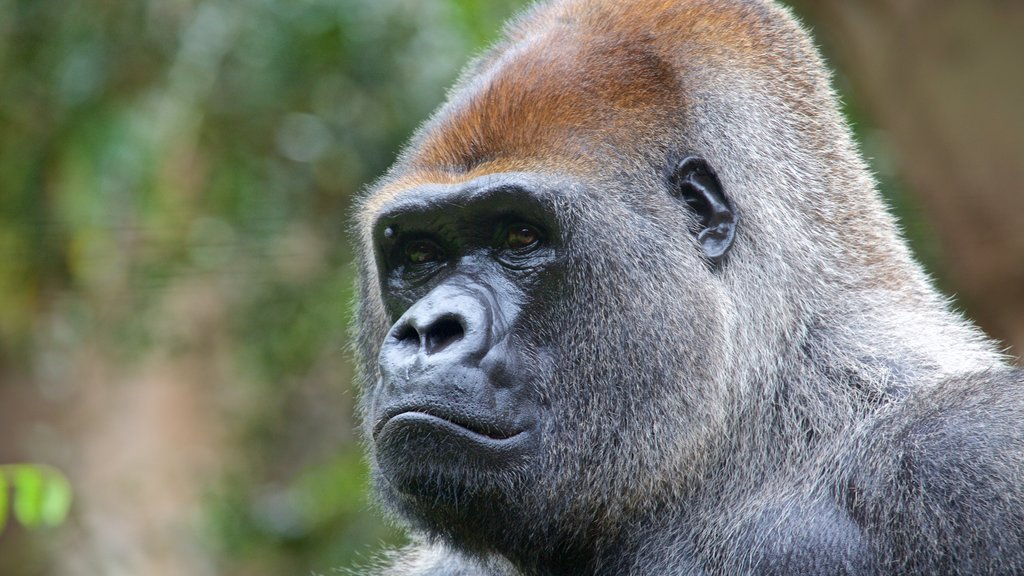 Loro Parque which includes dangerous animals
