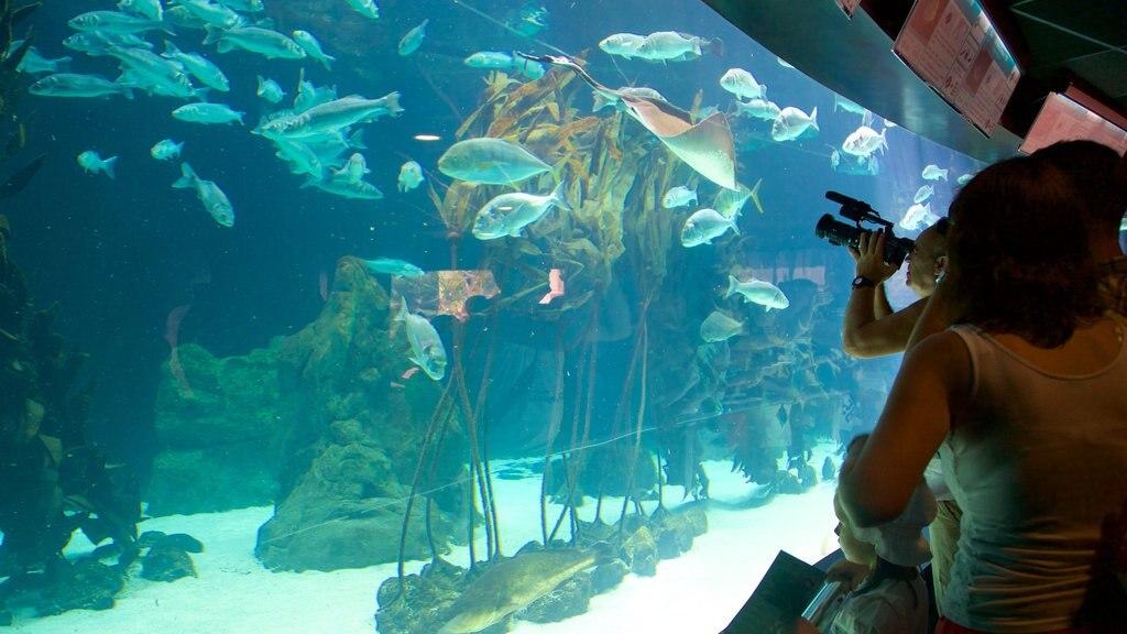 Loro Parque featuring marine life