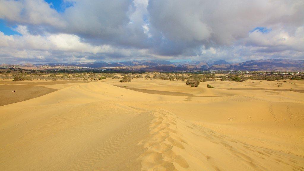 Maspalomas Dunes showing desert views