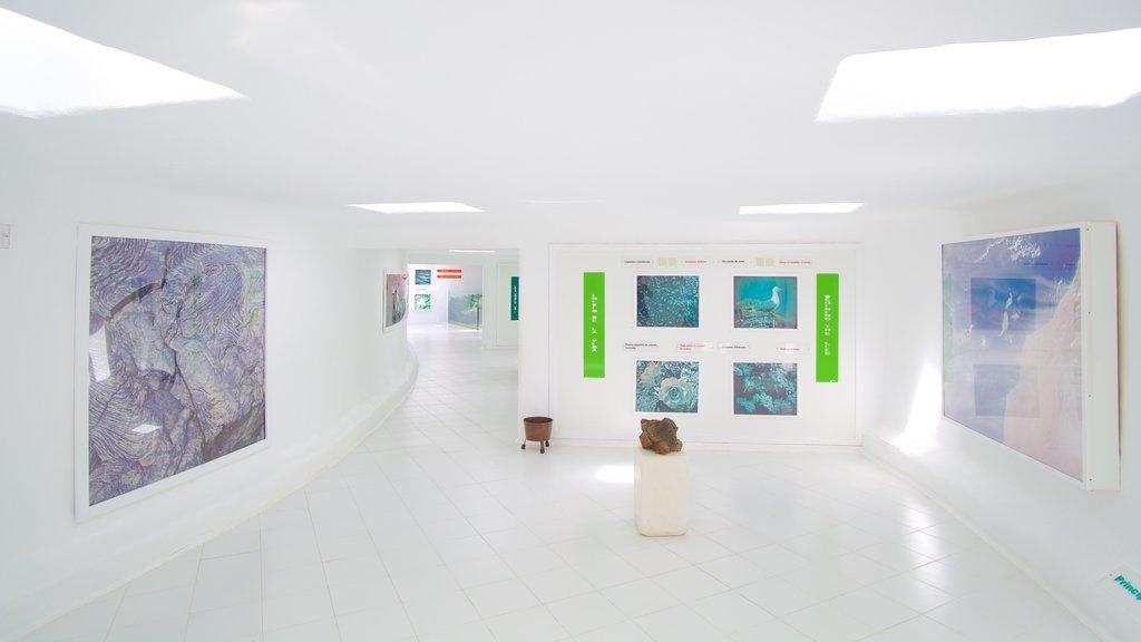 Jameos del Agua featuring interior views