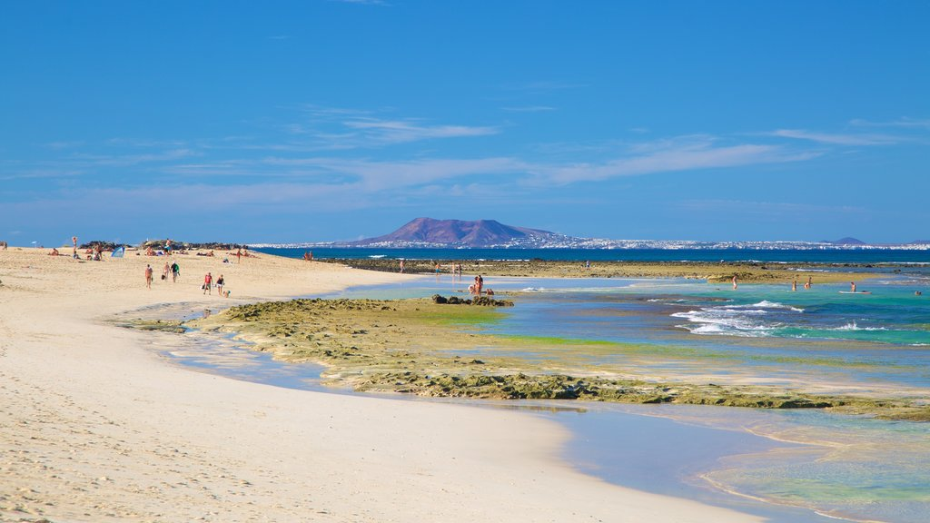 Corralejo Beach which includes general coastal views and a beach