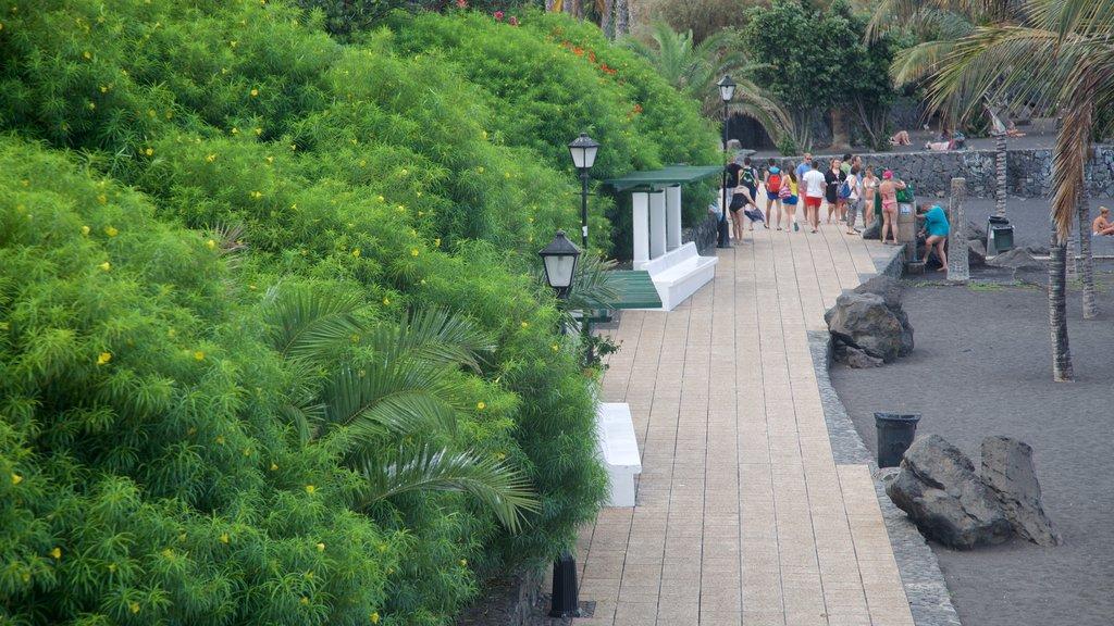Garden Beach showing tropical scenes