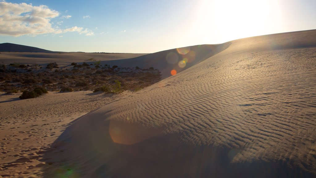 Tenerife showing a sunset and a sandy beach