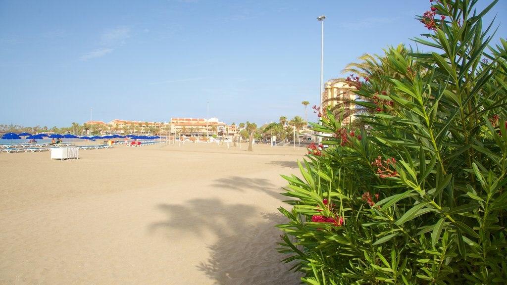 Las Vistas Beach which includes a beach and general coastal views