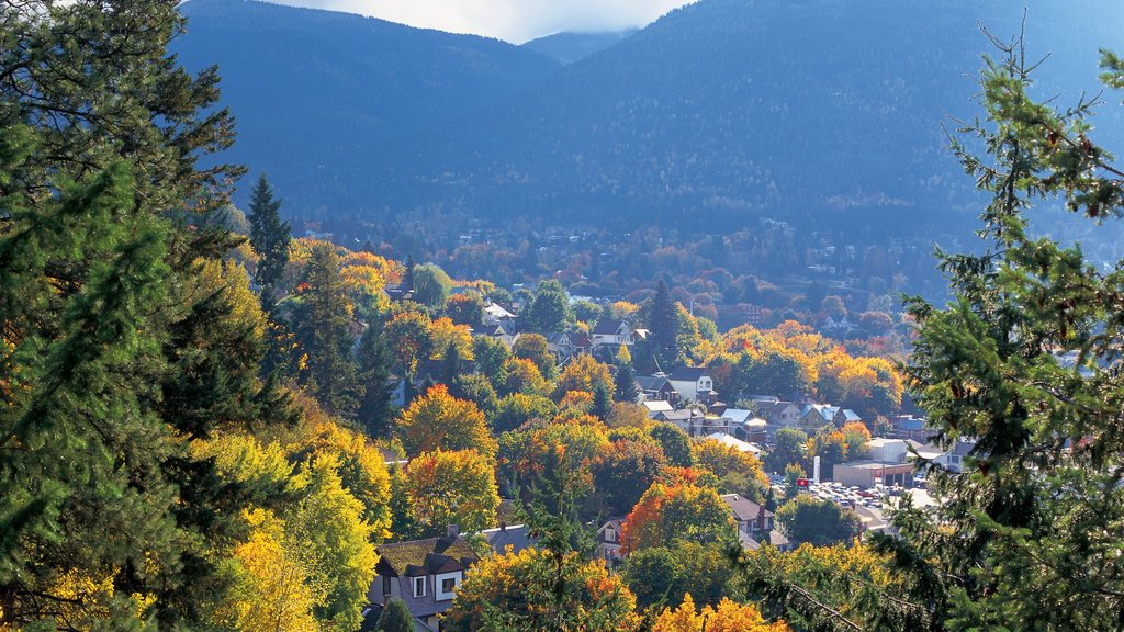 Nelson featuring fall colors and a city