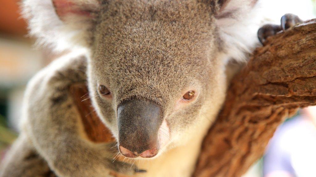 Zoo Wild Life Sydney que incluye animales tiernos