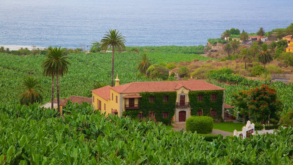 Tenerife showing tropical scenes, general coastal views and a house