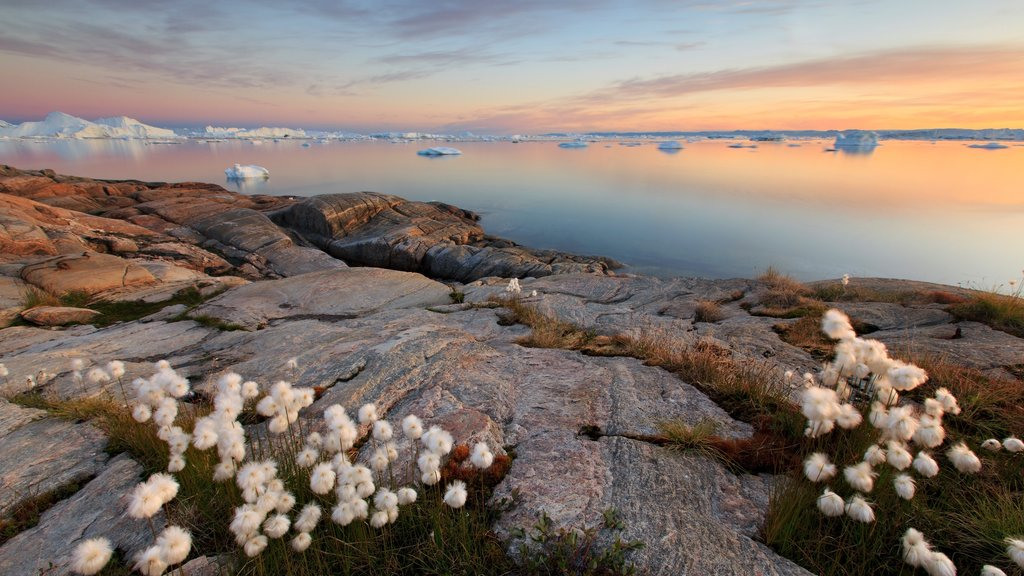 Greenland showing rugged coastline, flowers and landscape views